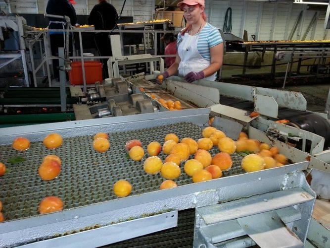 Food and Drink Industry Encourages STEM Careers by highlighting engineering